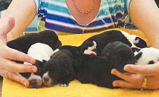 Bobbie-Jo found eight puppies abandoned in a Rockhampton Lifeline bin yesterday.
