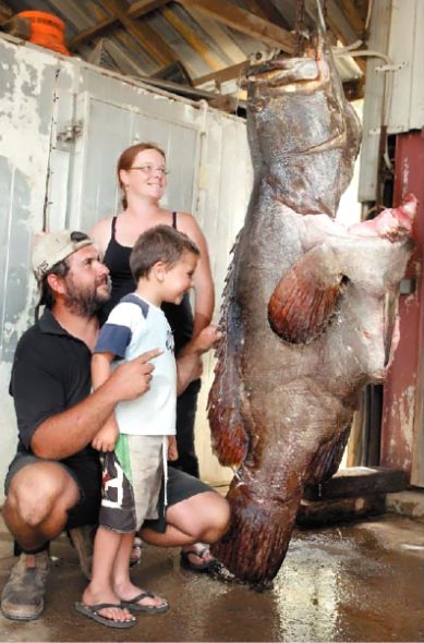 Awesome fish has hefty price tag queensland times for Old wife fish