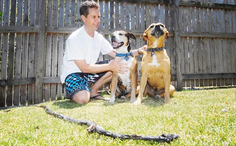 Todd Harrington and his heroic dogs, Oscar and Jade, who protected the family by killing a deadly snake just metres from a children's sandpit in their Eimeo backyard.