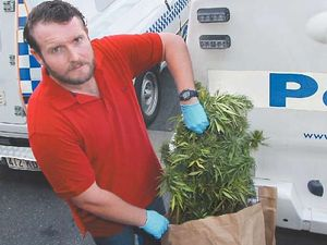 15 cannabis plants found were for 'personal use' court hears