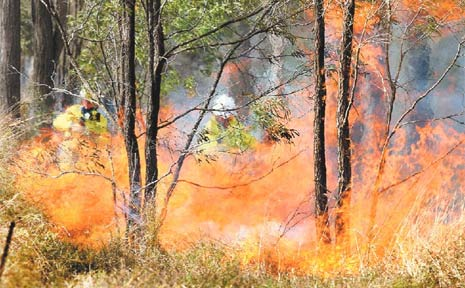 HOT WORK: Queensland Fire and Rescue officers battle a grass fire on a property on Brass Road at Mt Forbes.