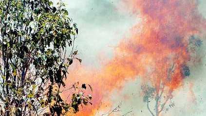 SMOKE CHOKE: Kites, eagles and hawks soared through the smoke as their habitats succumbed to the flames.