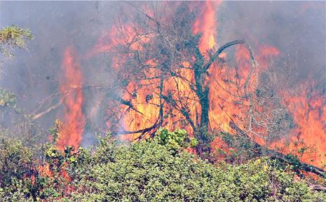 Bushland near Kerosene Bay goes up in flames.