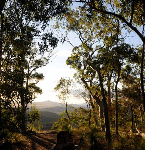 The Gympie Region's political representatives have enthusiastically backed a citizen's plan to re-locate the head office of Queensland's massive forestry operation to Gympie.