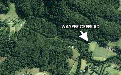 The forest near Dairyville where the torso was found.