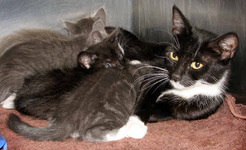 A cat and her seven kittens live to use up more of their nine lives in the years to come.