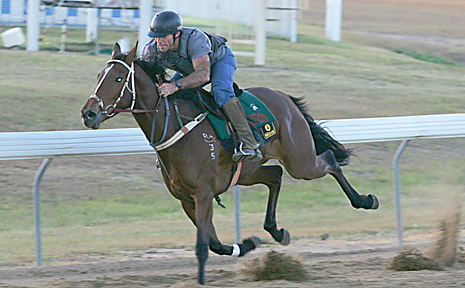 Trackwork at Thabeban Park on the eve of the Melbourne Cup day meet. Photo: Ron Burgin