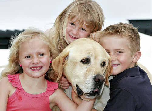 LUCKY ESCAPE: Harry the much-loved Labrador with his family, Millie, 5, Marley, 3, and Jarvis, 7.