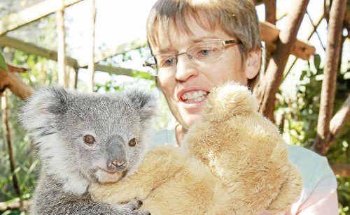 Sue Johnson is seeking volunteer carers for local koala rescues.