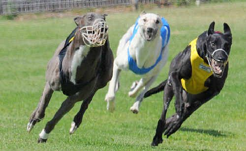 Fitzburg (yellow) races home in front of High Dancer and He's Tryin.