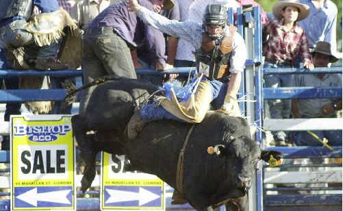 A file photo of Kyogle's Dave Kennedy, who is in Tamworth competing at the Australian PBR titles.