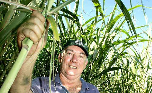 Tweed Canegrowers Association chairman Robert Quirk shows some healthy cane.