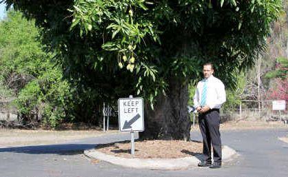 Cr Tony Williams wants to preserve the historic tree in Mason Street.