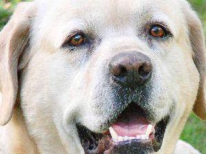 Ticks still pose problem for pets