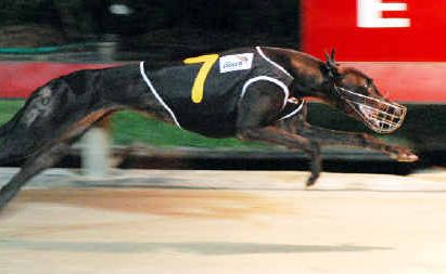 Fine Display strides to the line an easy winner in her semi-final of the Renzo Park Star Maker (520m) at Colemans Point last Tuesday.