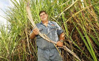 Richmond River Cane Growers' Association chairman Wayne Rodgers checks on the progress of a field of sugarcane on his Pimlico farm as high world sugar prices increase the value of his harvest.