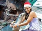 Tennis ace Ana Ivanovic spends time with April the seal at Underwater World yesterday.