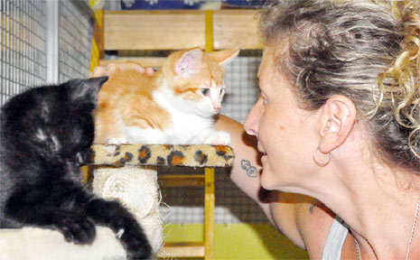 Care for your cat ... Angela McDermott has issued a timely reminder for cat owners.