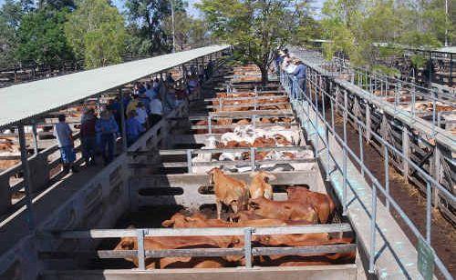 The former Gracemere Saleyards, now titled Central Queensland Livestock Exchange.