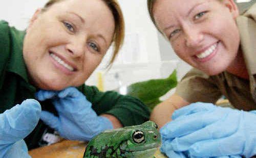 Currumbin Wildlife Sanctuary volunteer Jenny Zatta (left) helps associate vet Camille Alexandra.