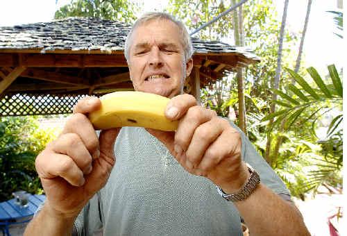 Peter Molenaar, of Mullumbimby, attempts to bend one of his Lady Finger bananas to suit supermarket criteria.