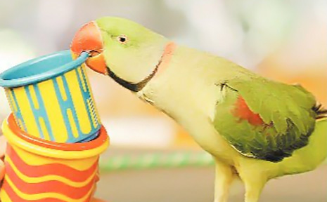 See Dail Malins and her amazing parrots at her Glasshouse Mountains hobby farm.