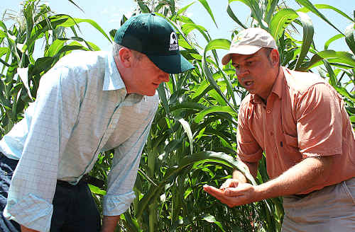 Agriculture Minister Tony Burke and research scientist Lukas Van Zwieten checking a corn crop that is part of the biochar trial.