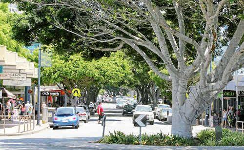 Bulcock Street fig trees.