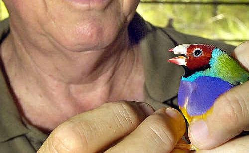 Russell Kingston has been honoured with an Order of Australia Medal for his service to aviculture.