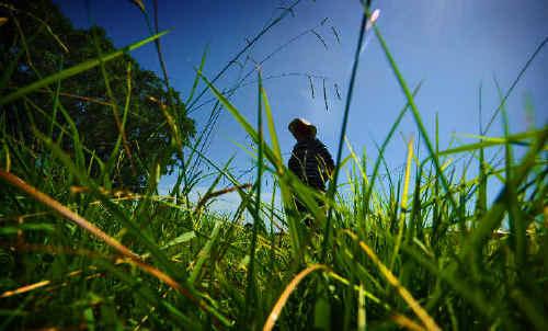 Bill Holmes, of Grafton, walks through the long grass of North Park.