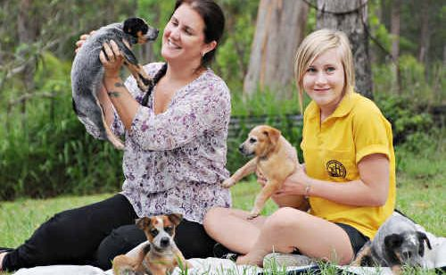 Jeraldene McKenna marvels at how Grace survived a snake attack on Tuesday, while daughter Tia holds one of the other cattle dog pups.