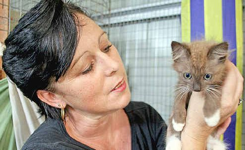 Animal Rights and Rescue Group volunteer Louise Hunter with one of the kittens that was dumped on their doorstep last Saturday.
