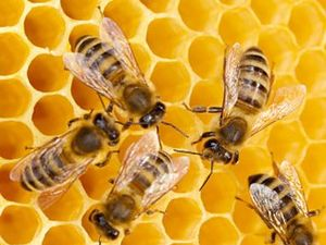 Not enough honey for Brunswick Heads developer