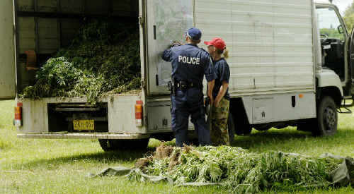 NSW Police Drug Squad officers Darren Worthing and Julia Robb with their haul at the Mullumbimby Showground.