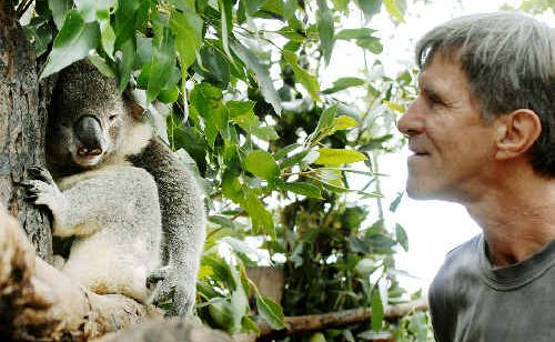 Friends of the Koala rescuer and leaf collection coordinator Rick Stewart with Constable, who was hit by a car recently.