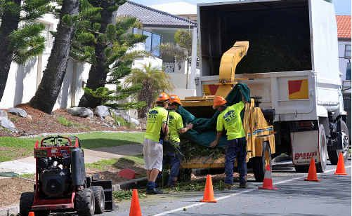 Workmen remove Norfolk Pines along Pacific Boulevard, Point Cartwright.