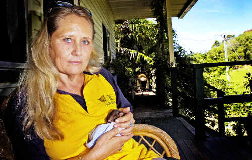 WIRES carer and cattle farmer Katy Stewart, of The Pocket, concerned for the native wildlife that are at risk from the wild dog packs that roam the area.
