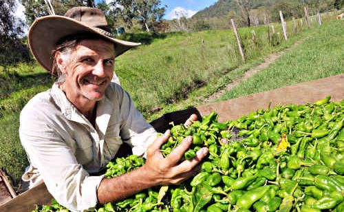 Richard Mohan has found a niche market with his Spanish peppers, called pimientos de Padron, and now sells them to 17 of Australia's top 20 restaurants.
