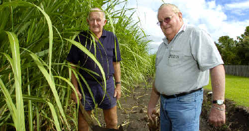 Cane cutter Terry McKeough (left) and derrickman John Day, of Broadwater, preparing for tomorrow's cane industry reunion in Broadwater.