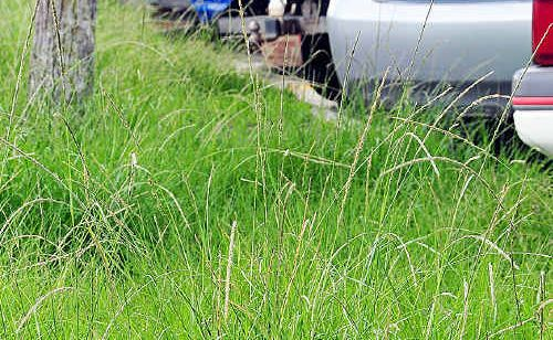 Grass along Poinciana Avenue, Tewantin is growing too rapidly.