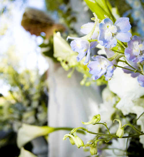 This year's North Coast bridal expo will feature florists, cake decorators, celebrants, beauticians, restaurateurs, wedding planners, car hire services and much more.