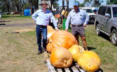 Lawrence Springborg and Doug McDougall with the winning giant pumpkin at the Inglewood Show, at 304kg.