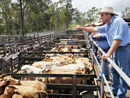 Gympie livestock auctioneer Dan Sullivan welcomed good prices at yesterday's Gympie cattle sales.