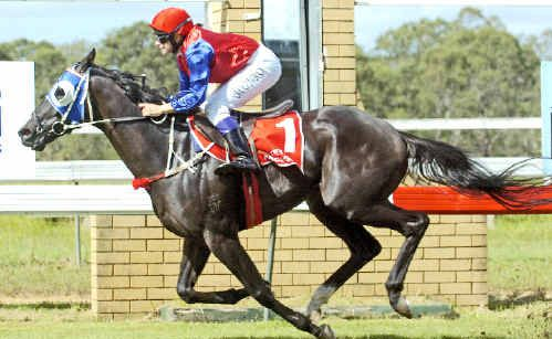 Bob each way: Watchword, ridden by Samantha Munro, takes out the Bob Small Bridle (1400m) at the Casino races on Saturday.