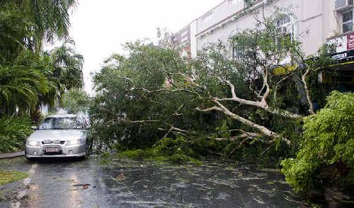 Traffic edges past fallen trees in Victoria Street in Mackay's CBD yesterday.