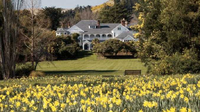 Daffodil Day comes to Otahuna Lodge near Christchurch this spring.