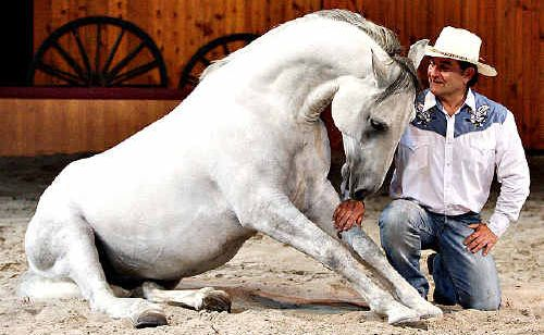 The Horseman from Snowy River Rene Gasser is bringing his outback extravaganza to Coffs Harbour.