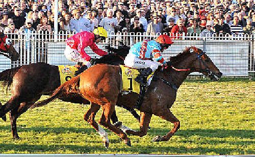 2009 Coffs Harbour Gold Cup winner, Legendary Man could well be a starter in 2010.
