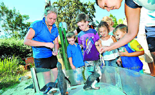 PECKISH: A crew member helps visitors feed some of the little blue penguins at the Pet Porpoise Pool.