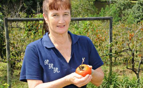 Jeanette Wilson with a surviving persimmon.